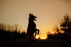 Dog silhouette at sunset. Silhouette of a beautiful dog at sunset in nature Royalty Free Stock Images
