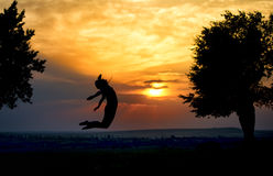 Silhouette of a beautiful girl jumping in the sunset. And trees Royalty Free Stock Photos