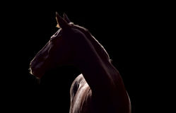 Silhouette of beautiful horse. Against the black background Stock Images