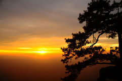 Silhouette of Beautiful Japanese pine trees. On Sunset background Stock Images