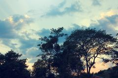 Silhouette Beautiful light tree the before sunrise the morning Royalty Free Stock Photo