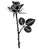 Silhouette of beautiful rose bud Stock Image