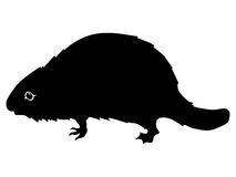 Silhouette of beaver Stock Image