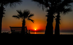 Silhouette of a bench and palm trees Stock Photography