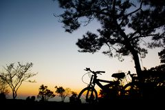 Silhouette bicycle of pine trees forest with light during sunset. Winter season Royalty Free Stock Image