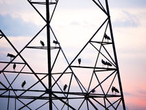 Silhouette of big birds on electrical tower Stock Photography