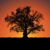 Silhouette of a big mighty oak against sunset. Royalty Free Stock Photos