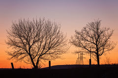 Silhouette of a big oak against sunset Royalty Free Stock Photo