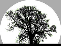 Silhouette of Big Tree Royalty Free Stock Photography
