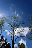 Silhouette. A silhouette of big tree against clearly blue sky stock images