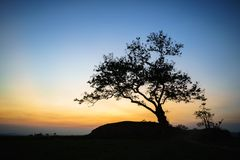Silhouette of a big tree against sunset.  Royalty Free Stock Photos