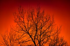 Silhouette of a big tree Stock Images
