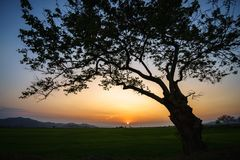 Silhouette of a big tree against sunset.  Stock Photos