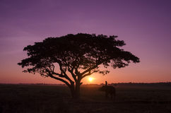 Silhouette big tree with the elephant and mahout in the sunset. Stock Images