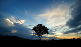 Silhouette big tree on the hill Royalty Free Stock Images