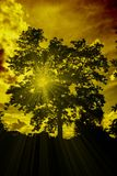 Silhouette big tree with light ray. On sunset royalty free stock photography