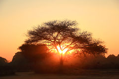 Silhouette of a big tree Stock Photos