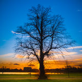Silhouette of a big tree at sunset Stock Images