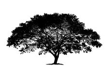 Silhouette big tree. vector logo design. isolated natural plant Stock Photography