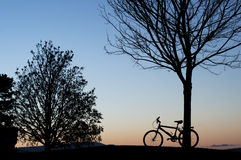 Silhouette of a bike leaning against a tree at sunset. Silhouette of a bike leaning against a tree among other trees at the park during sunset royalty free stock photography