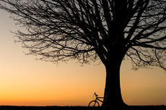 Silhouette of a bike and a winter tree at sunset Stock Photography