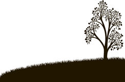 Silhouette of birch tree with leaves at grass Royalty Free Stock Photos
