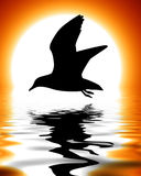 Silhouette of a bird Royalty Free Stock Photography