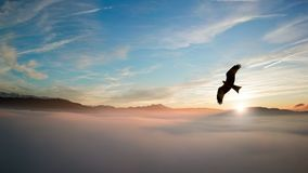 Silhouette of Bird Above Clouds Stock Image