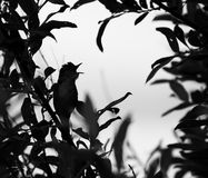 Silhouette of the bird on branch Royalty Free Stock Photos