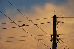 Silhouette bird on electric wire on sunset Stock Image