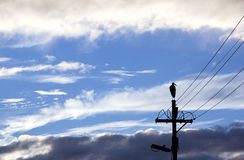 Silhouette of Bird on Electricity Pole with Wintry Clouds Royalty Free Stock Photo