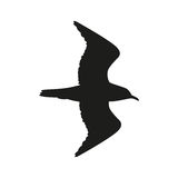 Silhouette of the bird flying in black color. Royalty Free Stock Photography