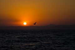 Silhouette of Bird Flying on Bodies of Water during Sunset Royalty Free Stock Photos