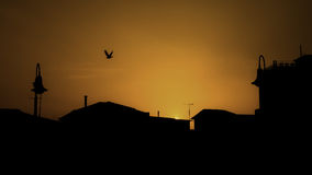 Silhouette Bird Flying Over Buildings Against Clear Orange Sky During Sunset Stock Image
