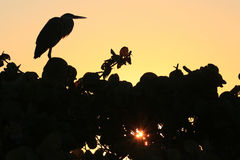 Silhouette of a Bird Royalty Free Stock Photos