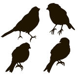Silhouette of a bird isolated. Different angles Royalty Free Stock Photos