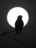 Silhouette of a bird in the moon Royalty Free Stock Photography