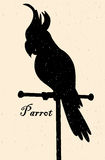 Silhouette of the bird. A parrot on a perch Royalty Free Stock Photos