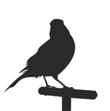 The silhouette of a bird on a perch. Vector illustration. Silhouette of canary. Vector icon Royalty Free Stock Photo