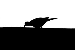 Silhouette bird Royalty Free Stock Photos
