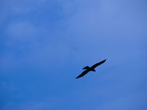 Silhouette of bird. Silhouette of a raptor in Zambia Stock Photo