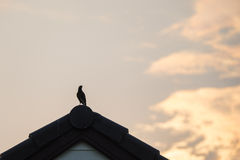 Silhouette Bird on roof Royalty Free Stock Images