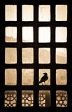 Silhouette of a bird sitting on a patternlike window in India stock photos