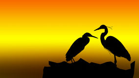 Silhouette of Bird Stock Photography