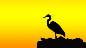 Silhouette of Bird Royalty Free Stock Photography