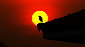 Silhouette the bird at sunset Royalty Free Stock Photos