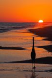 Silhouette Of A Bird At Sunset Stock Photography