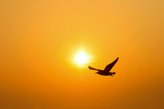 Silhouette bird sunset Royalty Free Stock Photos