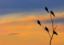 Silhouette bird at sunset Stock Images