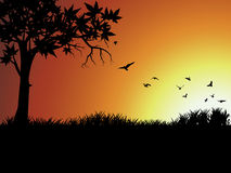 Silhouette bird and tree outside Stock Photography